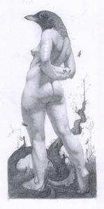 Blackbird dibujo anatómico