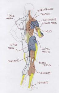 Dibujo anatómico creado por Iván Martínez